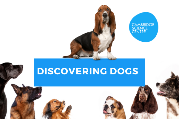 Discovering dogs – care for your dog and assistance dogs